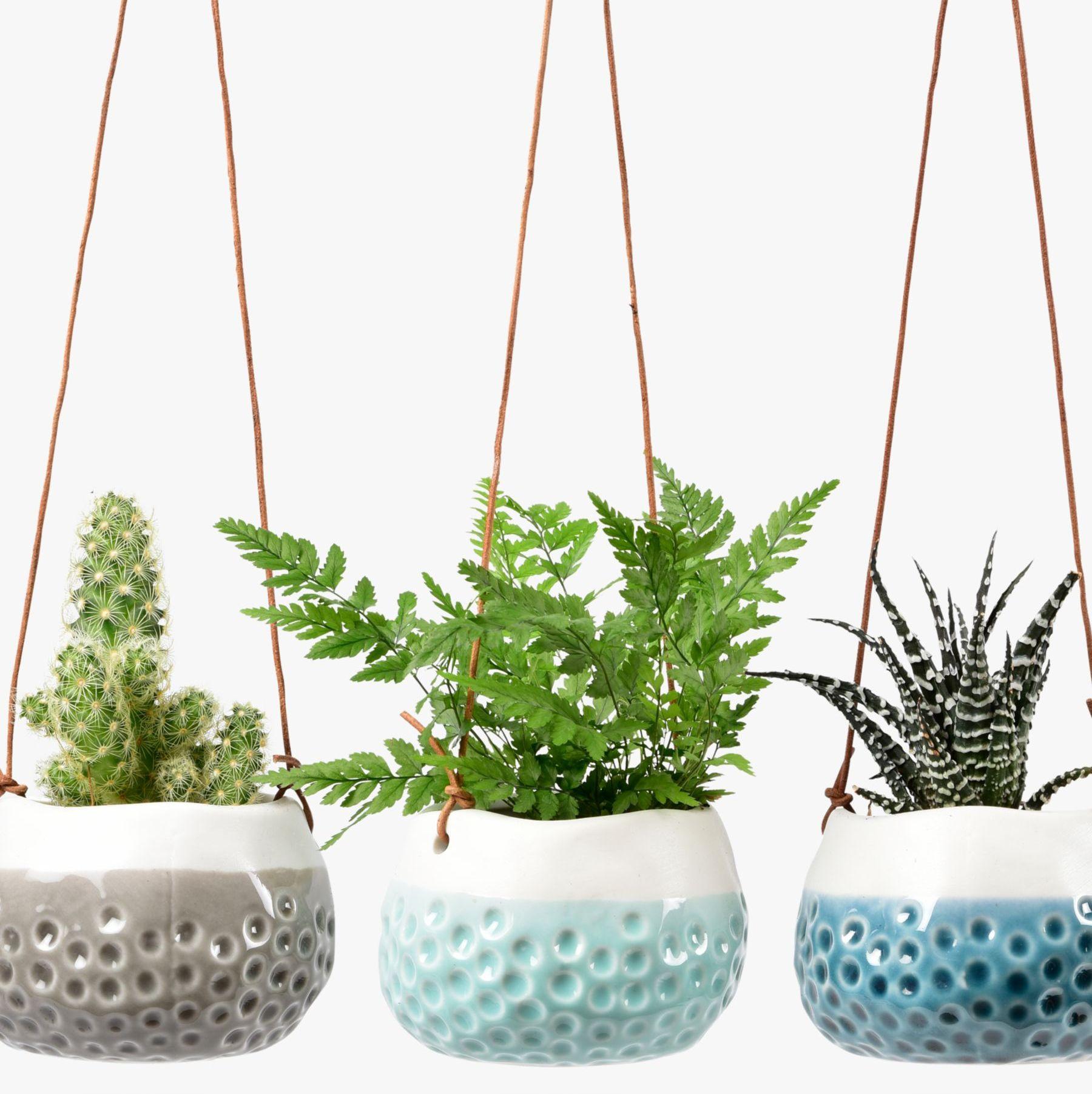 Succulent planter Wall planter Plant pot Plant hanger Hanging ceramic planter Pot for plant Hanging planter indoor Plant holder
