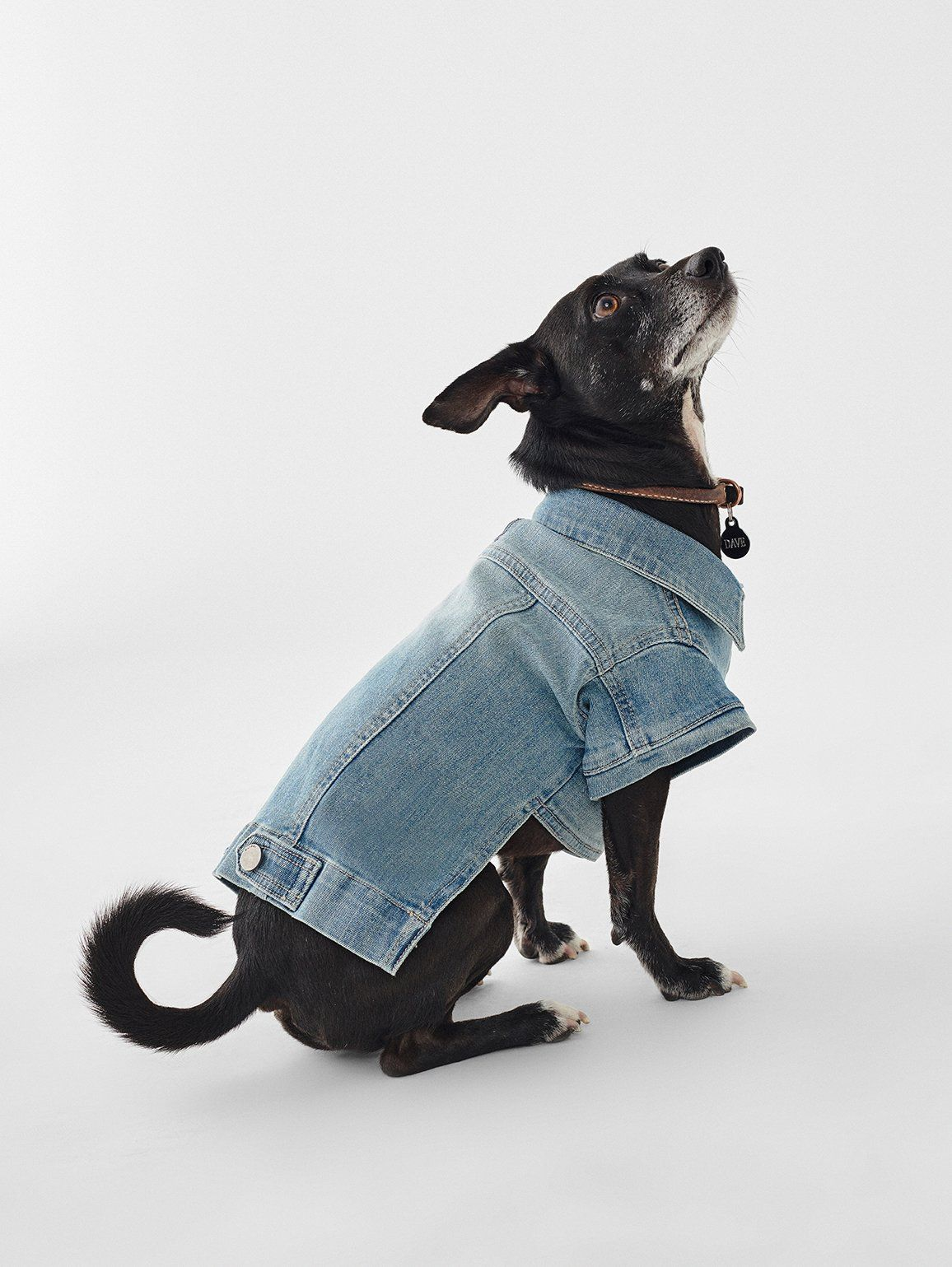 A Dog Denim Jacket