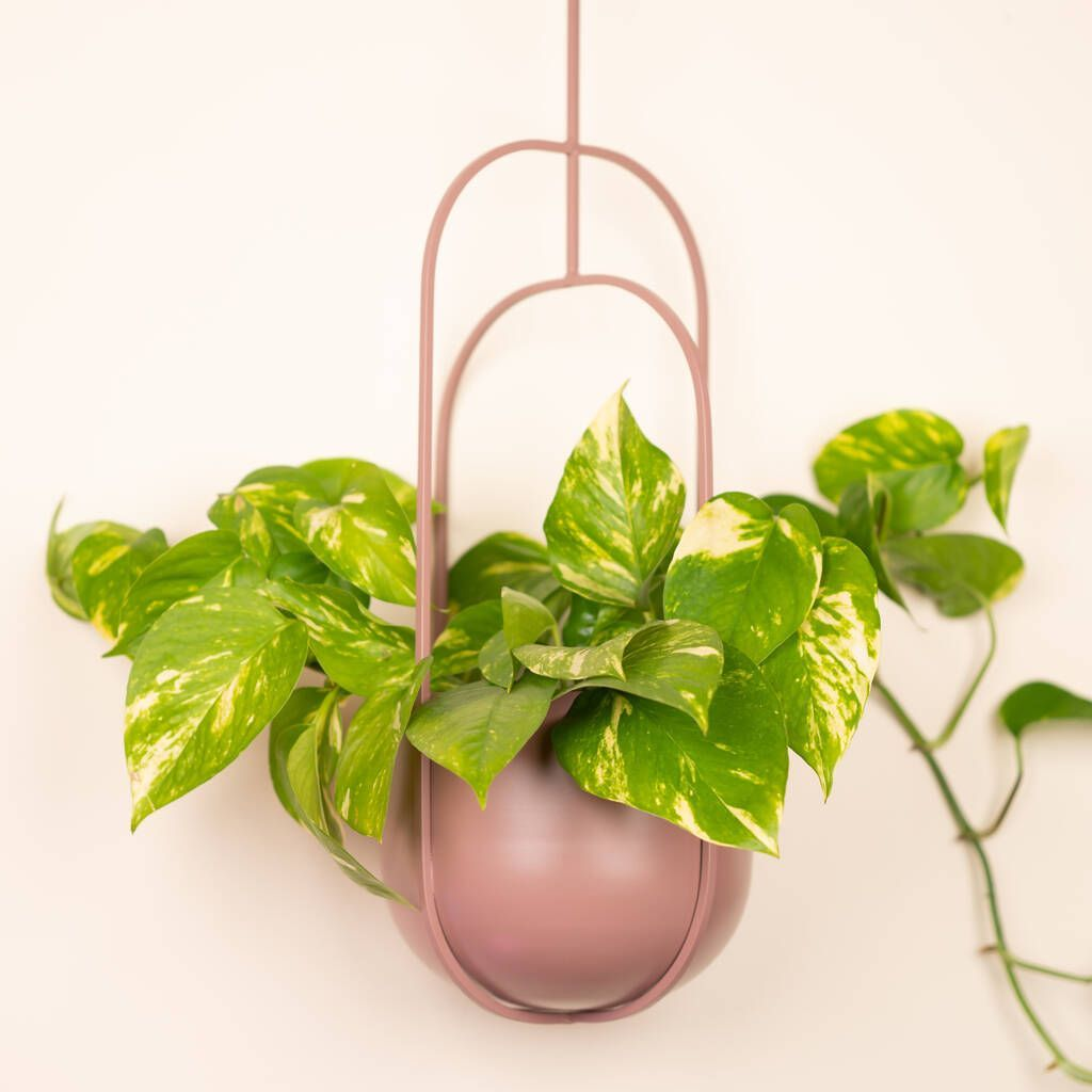 Hanging Plant Pots And Wall Planters