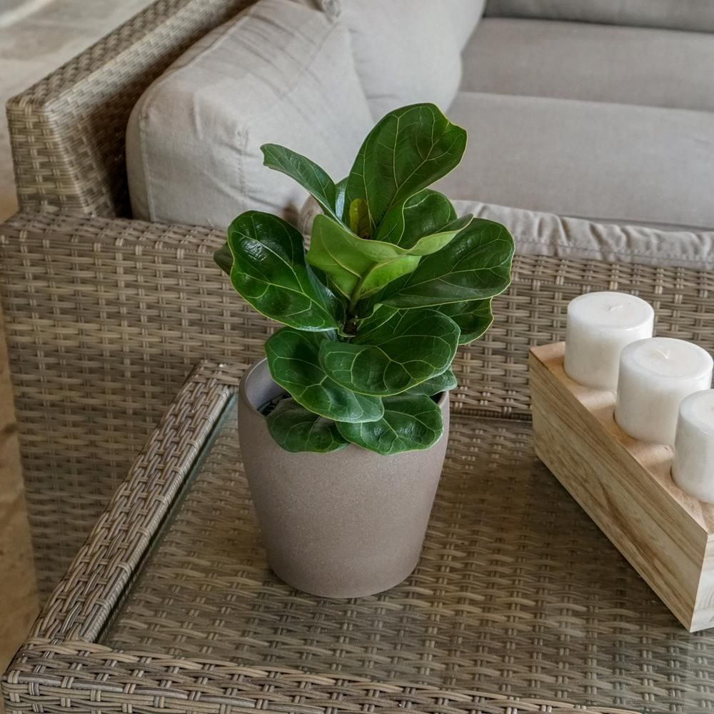 Best Sources For Buying Plants Online Where To Order Plants Online,Best Places To Travel In The Us In October 2020