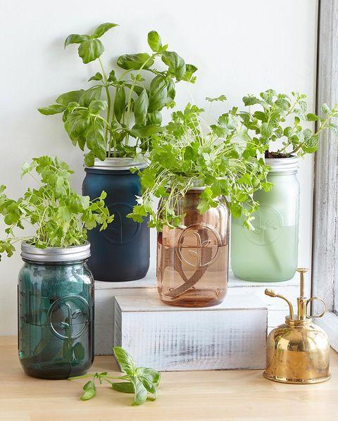 17 Indoor Herb Garden Ideas 2021 Kitchen Herb Planters We Love