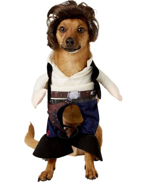 34 Best Halloween Costumes For Dogs 2020