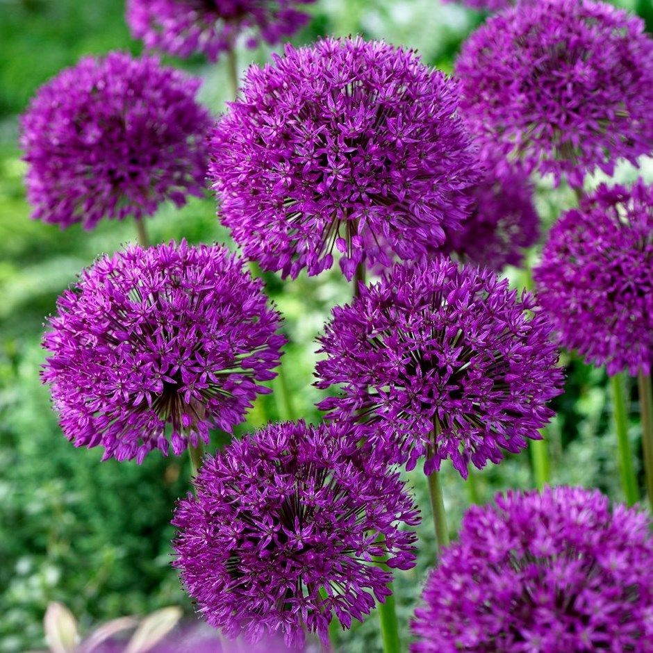 Best Garden Plants For Year Round, What Plants Grow All Year Round Uk