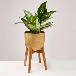 Gold Metal Planter & Mango Wood Stand