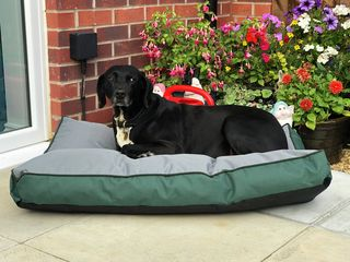 Waterproof large pet mattress