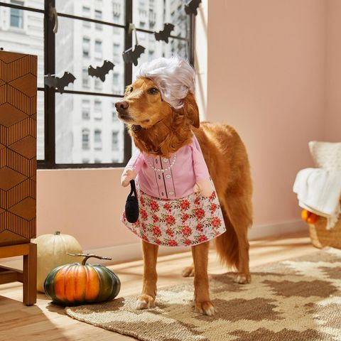 Tiny Dog Halloween Costumes.69 Dog Halloween Costumes Cute Ideas For Pet Costumes
