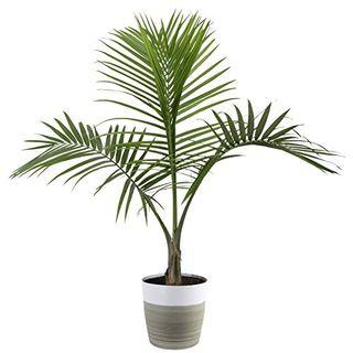 Величественная пальма
