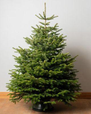 Arbre de Noël véritable coupe premium de 7 pieds