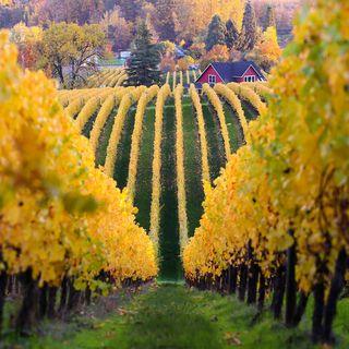 Sokol Blossern Family Winery