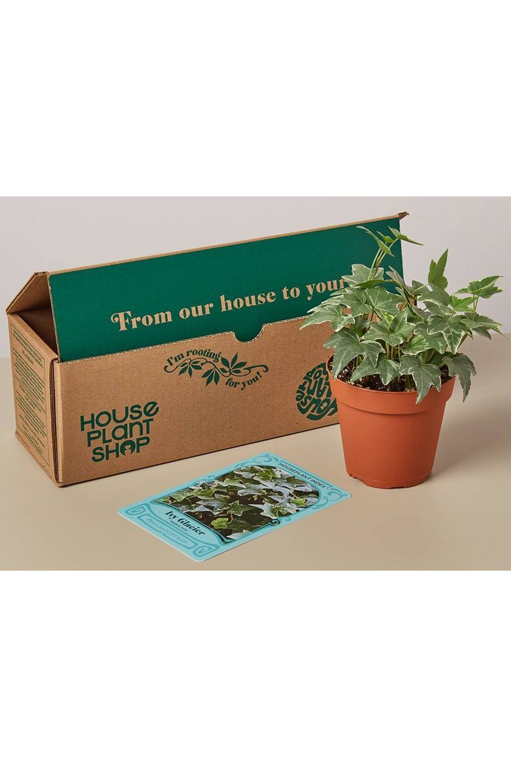 40 Best Gifts For Plant Lovers Cute Plant Gift Ideas 2020