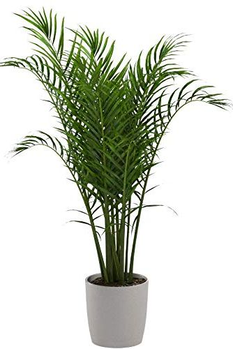 18 Best Indoor Trees Large Indoor Plants For Every Room In Your Home