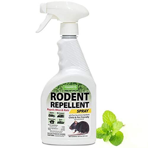 How To Get Rid Of Mice In The House, How To Control Mice In Basement