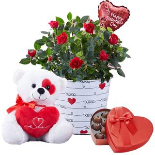 Bundle Of Love Rose Plant