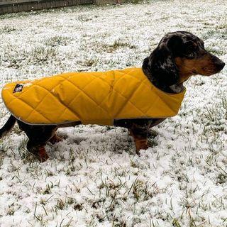 Custom fit waterproof dachshund coat