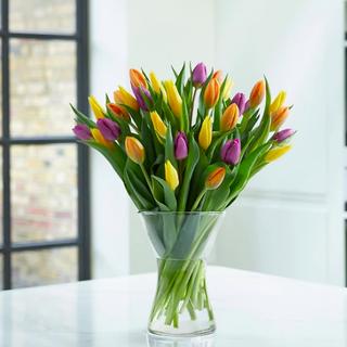 Trío de Tulipanes de Primavera Británico Abundancia