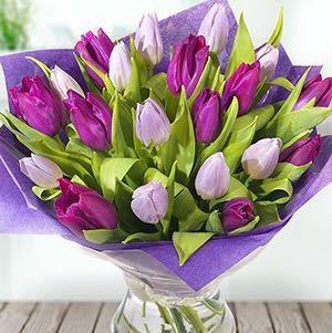 Simplemente Tulipanes