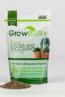Cactus et engrais succulent