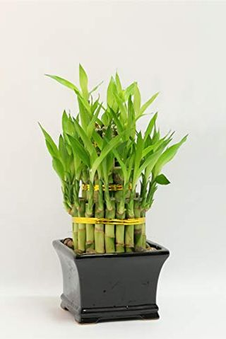 Happy bamboo tower