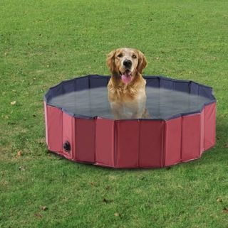 Pet Swimming Foldable Indoor / Outdoor Grooming Tub