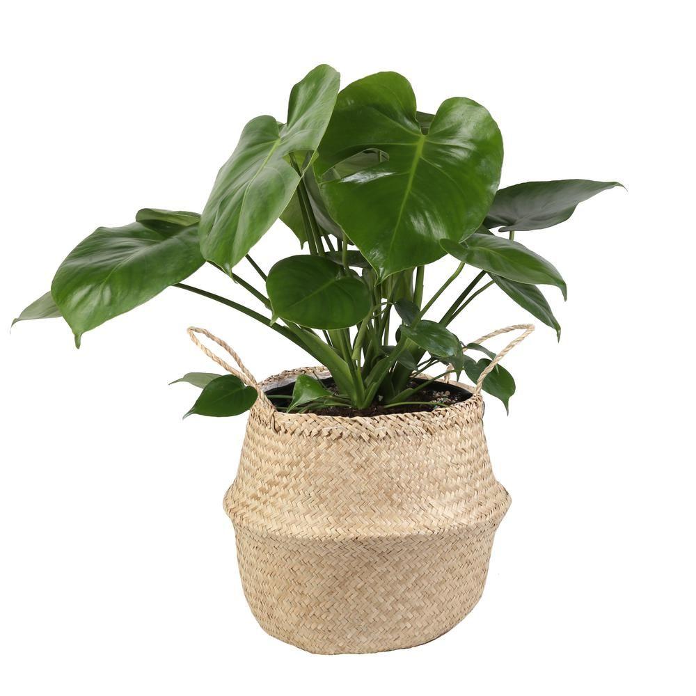 35 Best Indoor Plants For Apartments, Living Room Plants
