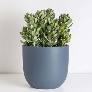 Ceramic Indoor Planter