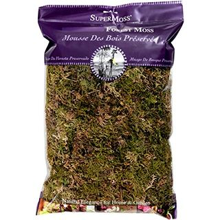 Dried Forest Moss