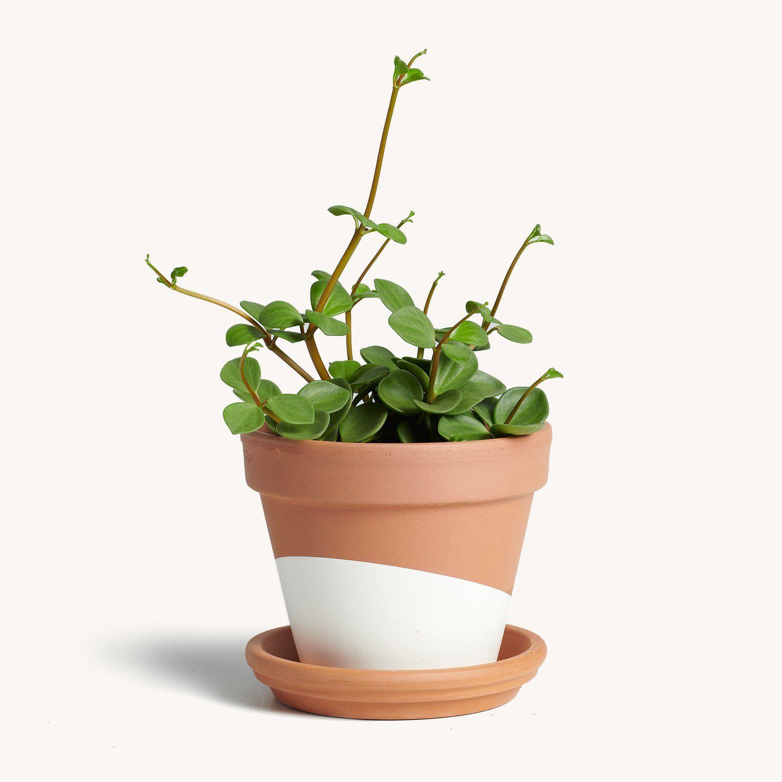 "Nervous Plant Parents Can Get ""Plant Insurance"" Through This Company"