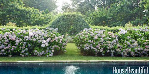 Vegetation, Shrub, Plant, Flower, Garden, Plant community, Botany, Groundcover, Spring, Landscaping,
