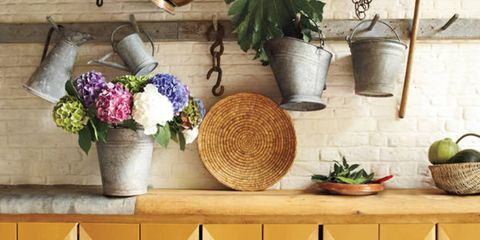 Carnivore, Interior design, Flowerpot, Dog breed, Home, Sporting Group, Houseplant, Vase, Companion dog, Natural material,