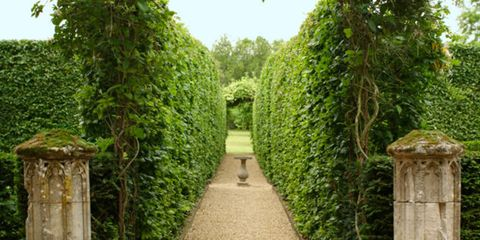 Vegetation, Green, Shrub, Botany, Arch, Garden, Hedge, Symmetry, Plantation, Environmental art,