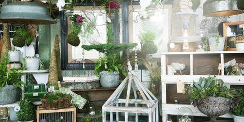 Plant, Flowerpot, Interior design, Houseplant, Backyard, Vase, Outdoor structure, Herb, Yard, Vascular plant,