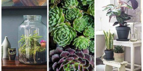 Green, Flowerpot, Leaf, Purple, Terrestrial plant, Botany, Houseplant, Annual plant, Design, Succulent plant,