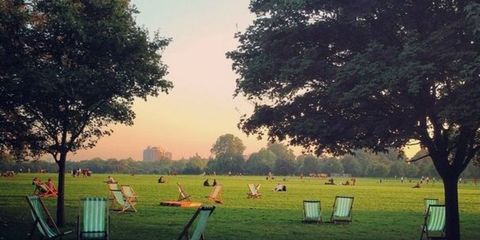 Nature, Natural landscape, Atmosphere, Sunlight, Morning, Park, Lawn, Deciduous,