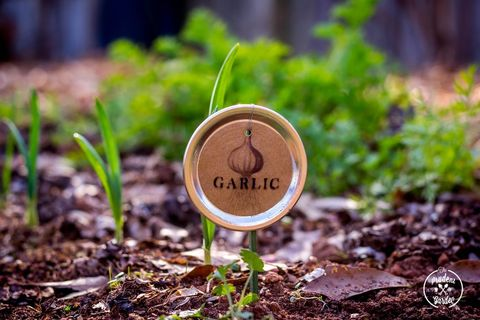 Leaf, Soil, Logo, Groundcover, Circle, Herb, Annual plant, Plant stem, Compost, Herbaceous plant,