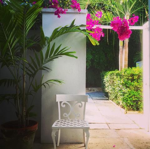 Petal, Flower, Pink, Magenta, Shrub, Garden, Annual plant, Flowerpot, Houseplant, Floristry,