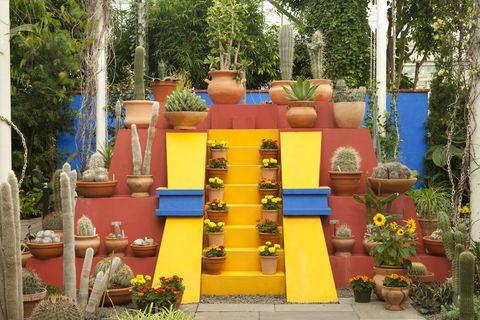 Plant, Flowerpot, Garden, Majorelle blue, Shrub, Houseplant, Landscaping, Annual plant, Botanical garden, Yard,