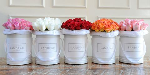 Petal, Flower, Peach, Lid, Cut flowers, Flowering plant, Food storage containers, Rose family, Rose, Rose order,