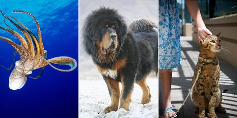 Dog breed, Organism, Textile, Dog, Carnivore, Sporting Group, Companion dog, Fur, Street fashion, Snout,