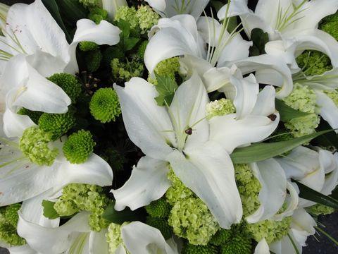 Petal, Flower, White, Cut flowers, Bouquet, Floristry, Lily, Floral design, Flower Arranging, Artificial flower,
