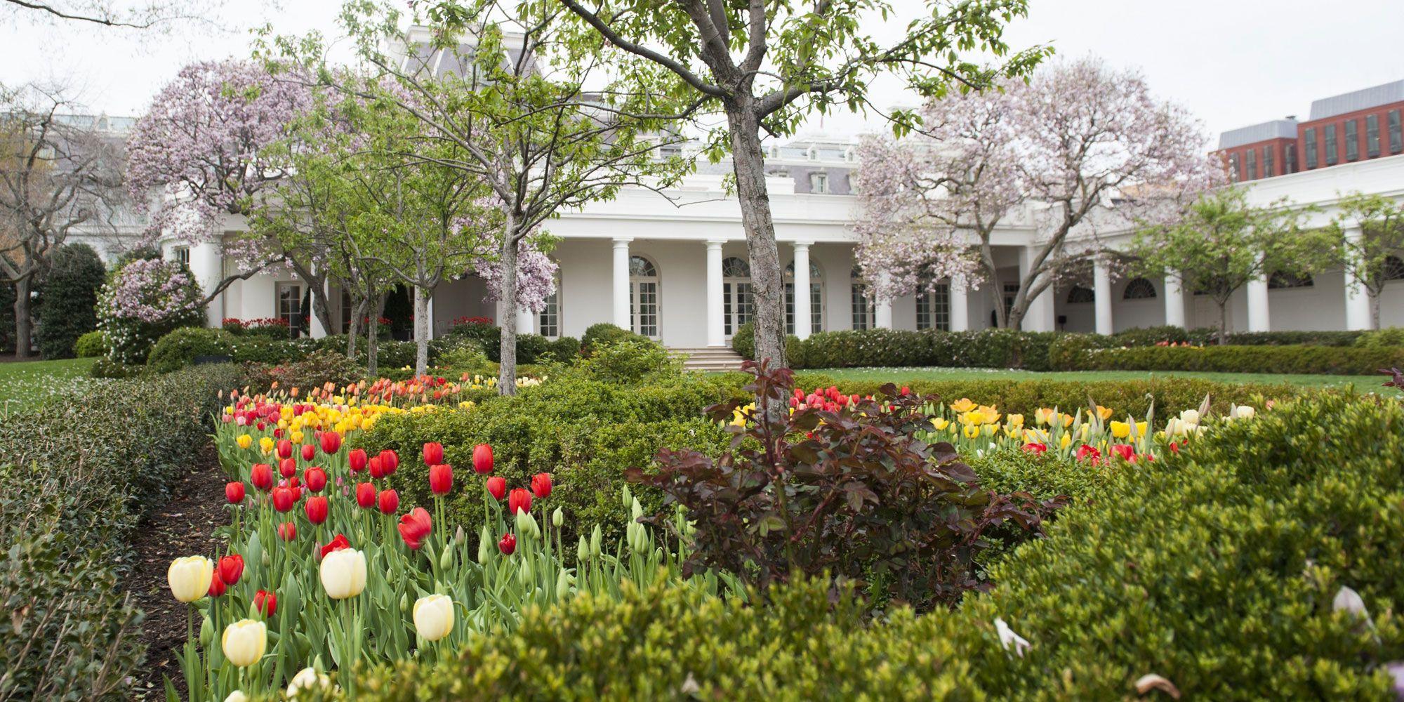 Explore The White House Rose Garden Through Jackie Kennedy Onassis\'s ...