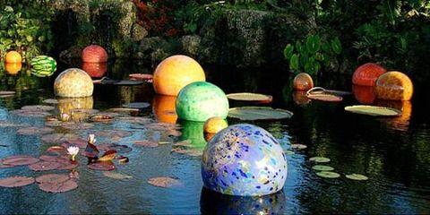 Nature, Reflection, Garden, Pond, Majorelle blue, World, Sphere, Shrub, Botanical garden, Water feature,