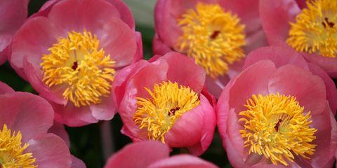 Yellow, Petal, Flower, Pollen, Annual plant, Wildflower, Daisy family, Macro photography,