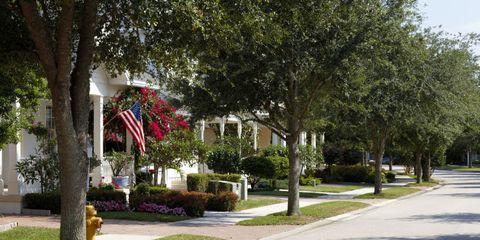 Plant, Neighbourhood, Road, Public space, Curb, Shrub, Woody plant, Garden, Sidewalk, Park,