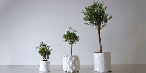 Branch, Leaf, Botany, Artifact, Flowerpot, Trunk, Twig, Plant stem, Still life photography, Vase,