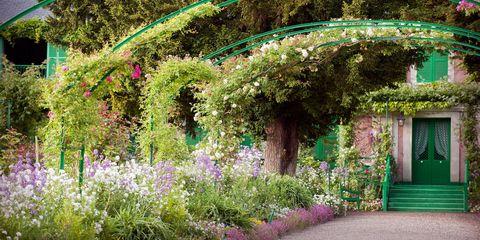 Plant, Shrub, Garden, Flower, Purple, Lavender, Groundcover, Door, Annual plant, Botanical garden,