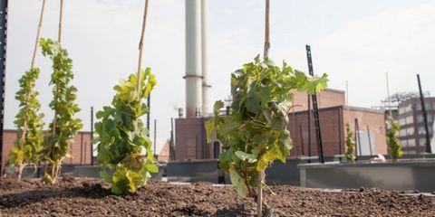 Leaf, Soil, Agriculture, Annual plant, Plantation, Plant stem, Compost,