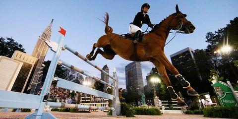Horse, Vertebrate, Bridle, Horse supplies, Horse tack, Rein, Halter, Equestrianism, Landmark, Jumping,