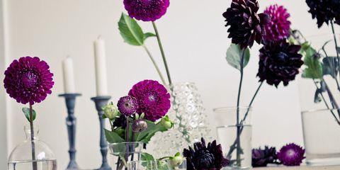 Petal, Flower, Purple, Violet, Floristry, Cut flowers, Pink, Lavender, Magenta, Flower Arranging,