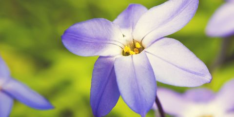 5 flowers you should be planting now mightylinksfo