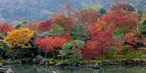 Nature, Vegetation, Natural landscape, Deciduous, Leaf, Red, Landscape, Tree, Bank, Woody plant,